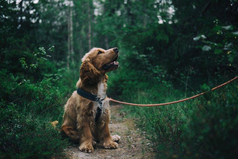Cum ar trebui să plimbați câinii în lesă ca să nu vă răniți. Recomandarea specialiștilor pentru iubitorii de animale
