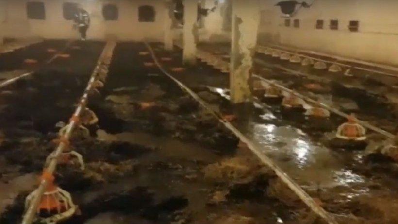 Incendiu de proporții în Hunedoara. Peste 16.000 de pui au ars de vii într-o fermă - VIDEO