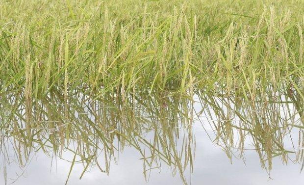 Vremea extremă a provocat efecte devastatoare în agricultură