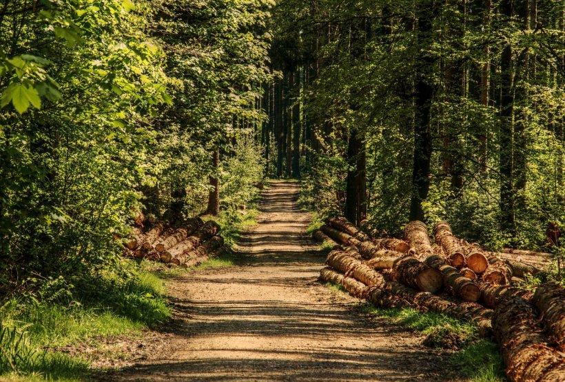 UNESCO va ancheta măcelul pădurilor românești 16