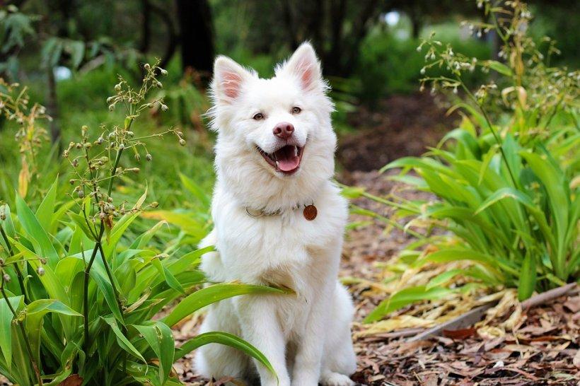 Fidelitate până la moarte și dincolo de ea! Un câine stă de un an și jumătate în locul unde i-a murit stăpânul