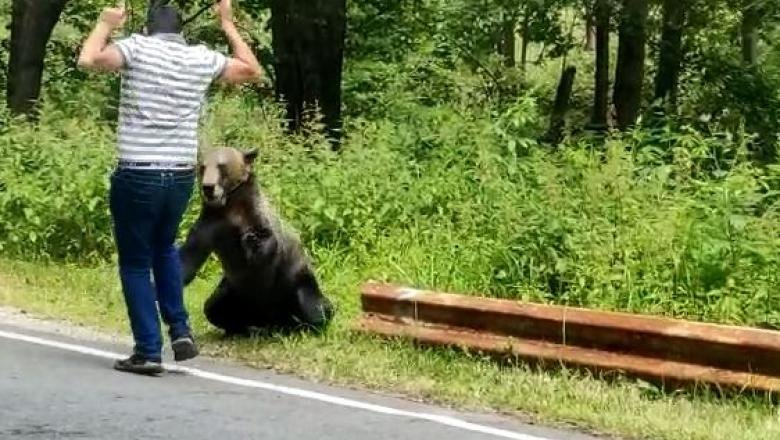 Un bărbat, la un pas să fie sfâșiat de un urs lângă Cetatea Poenari. A vrut să-și facă poză în timp ce îl hrănea