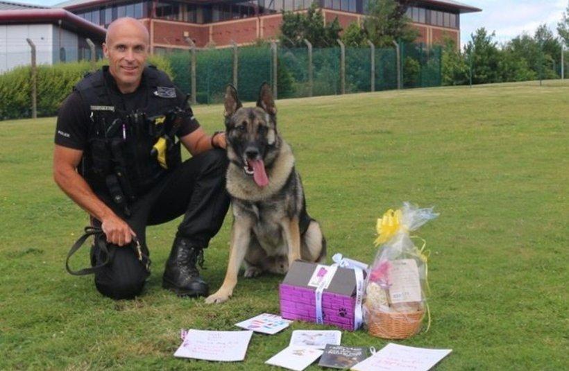 Atac îngrozitor asupra unui câine-polițist! Patrupedul a fost înjunghiat în cap în timpul unei misiuni