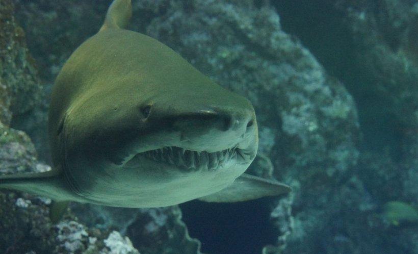 A intrat în apă să înoate, iar la scurt timp s-a văzut înconjurată de rechini. Părinții fetei au privit neputincioși întregul incident