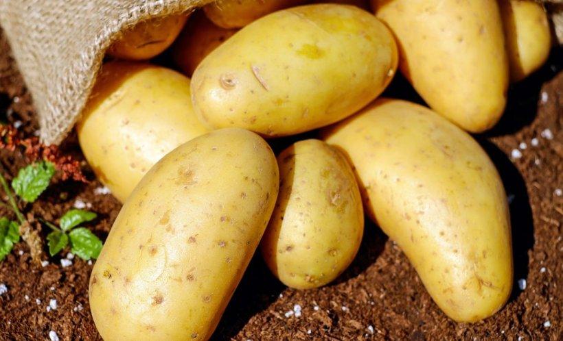 Cartoful românesc devine un lux pentru populație. Prețul unui kilogram va ajunge la cinci lei