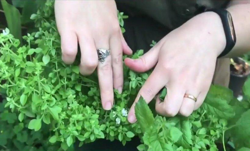 Agricool. Formolul, folosit la dezinfecția solului. Organizația mondială a sănătății: Substanța e cancerigenă!