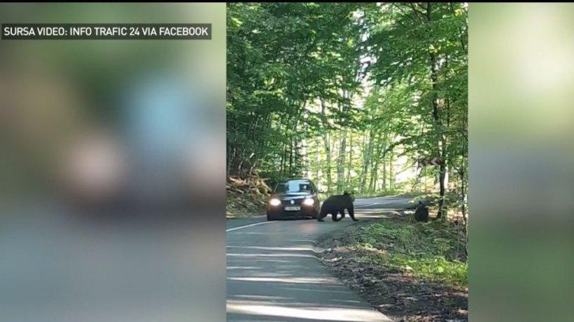 Imagini incredible: Cum sunt alungaţi urşii - VIDEO