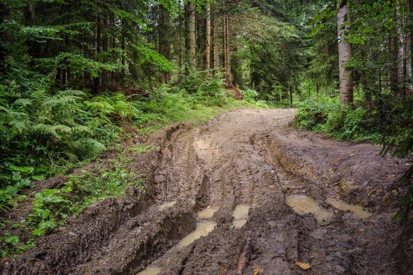 Pădurea care ascunde poarta Iadului se află în România. Oamenii spun că în acest loc lucrurile dispar fără întoarcere (VIDEO)