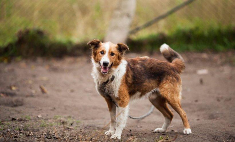 ASPA face apel disperat către bucureşteni să adopte câini din adăposturile municipalităţii