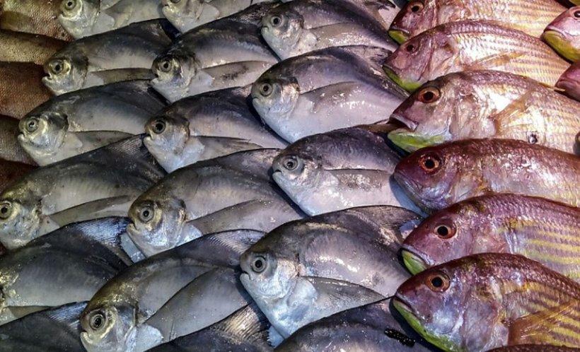 Românii consumă peşte de cea mai proastă calitate! 22 de tone au fost retrase de la raft