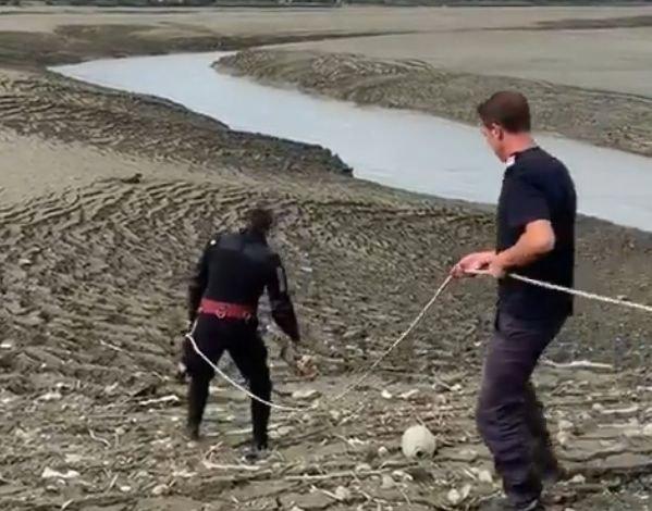 Oamenii auzeau zgomote de lângă barajul din Râmnicu Vâlcea și s-au dus să vadă ce se întâmplă. Era împotmolit în mijlocul noroiului și se lupta cu ultimele puteri să rămână în viață (VIDEO)