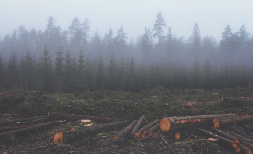 Peste 3.300 de copaci au fost tăiaţi ilegal în Munţii Rodnei. Prejudiciul creat este uriaș 534