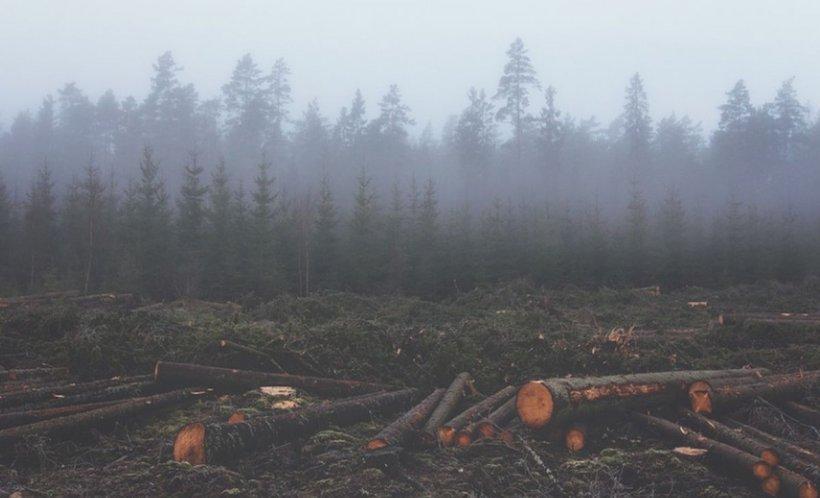 Peste 3.300 de copaci au fost tăiaţi ilegal în Munţii Rodnei. Prejudiciul creat este uriaș