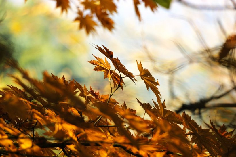 Prognoza meteo pentru 13 octombrie. Vreme neașteptată pentru această perioadă
