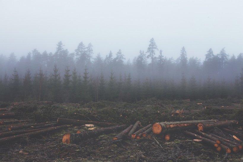Om ucis de mafia pădurilor. Se cere întrunirea de urgenţă a CSAT 16