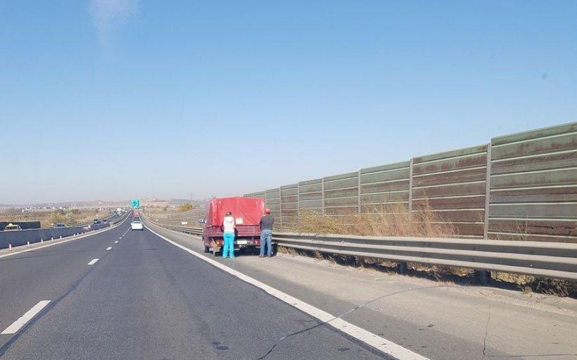 Șoferii aflați miercuri după-amiază pe Autostrada A1 Sibiu – Sebeș au avut parte de o surpriză neașteptată. Era viu și pe mijlocul străzii! (FOTO)