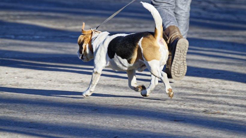 Primăria Capitalei vrea să înceapă recensământul animalelor cu stăpân. Ce amenzi riscă cei care refuză să participe