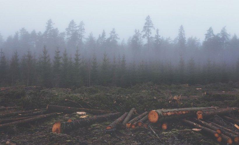 Pădurile României sunt măcelărite secundăde secundă. Câte cazuri de defrişări ilegale sunt înregistate în fiecare zi