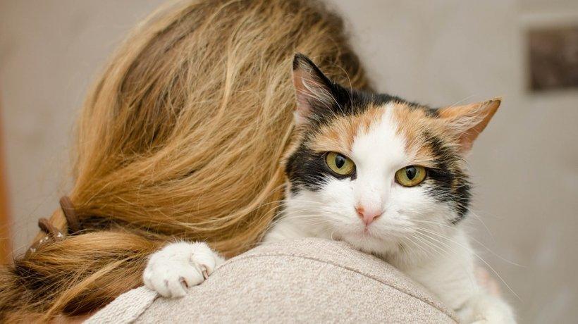 S-a îmbătat criță și a atacat un polițist cu o pisică. Felina i-a provocat răni grave omului. E incredibil ce a pățit acum suspectul