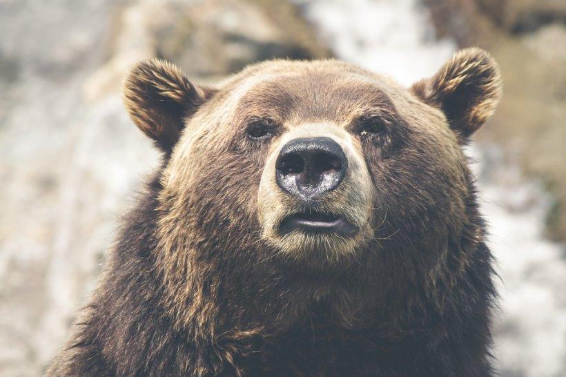 Urşii au făcut prăpăd într-un cimitir din Mureș. Ce au găsit rudele unui bărbat înmormântat recent