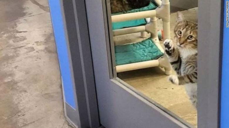 În fiecare dimineață, angajații adăpostului pentru pisici găseau ușa deschisă și felinele împrăștiate peste tot. Așa că au decis să se uite pe cameră. Au murit de râs, când au văzut cine era vinovatul