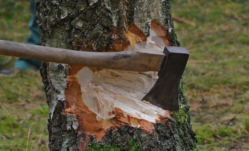 """Pilda Zilei. """"Pădurea era tot mai mică, dar copacii votau mereu pentru topor, căci ..."""""""