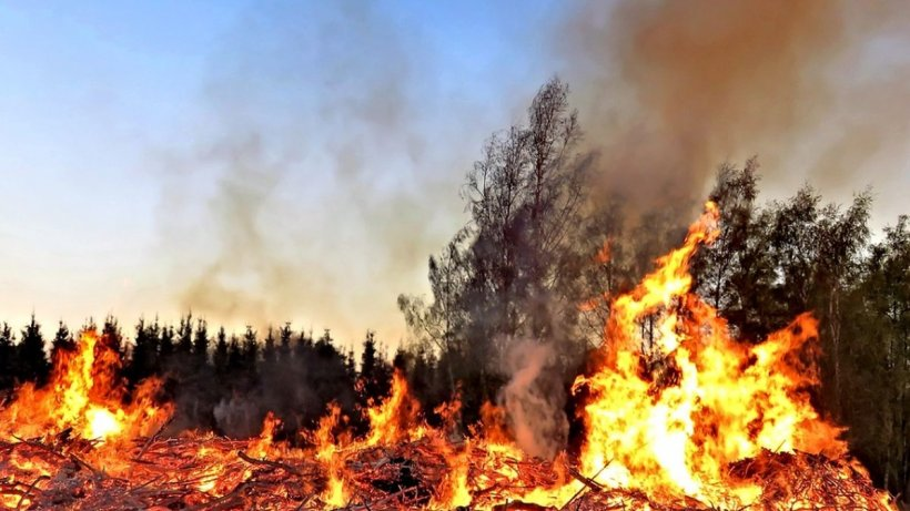 Tornadă de foc în Australia. Pompierii se luptă cu peste 140 de incendii de vegetaţie