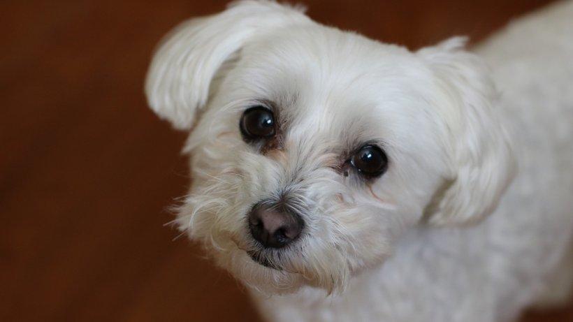 Își dorea enorm un câine, așa că atunci când l-a găsit a fost încântat fără măsură. Doar că într-o zi, când l-a spălat, a înțeles ce i s-a întâmplat. Ferească Dumnezeu de așa ceva! (VIDEO)