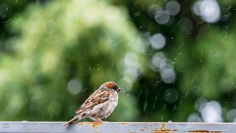 Vremea. Prognoza meteo până pe 29 decembrie. Vin ploile!