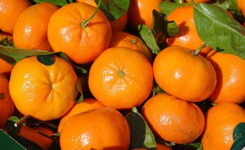 Mănânci clementine în această perioadă a anului? Trebuie neapărat să ştii asta