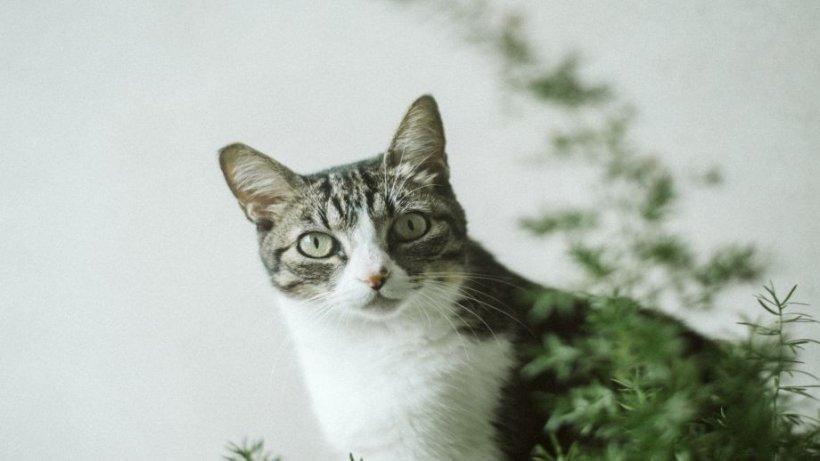 Numai de bine. Pisicile și plantele din jurul lor. Cum protejăm plantele din casă