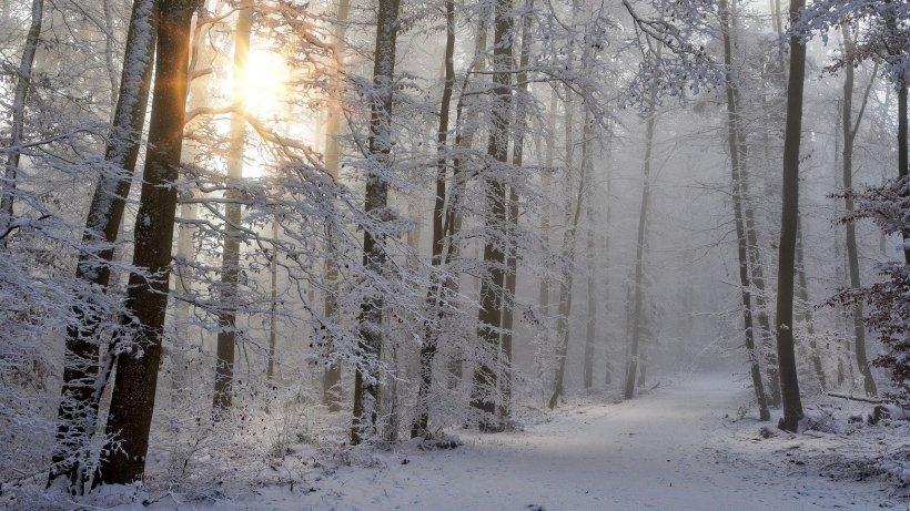 VREMEA. Meteorologii anunță ninsori în țară și temperaturi negative în ultimele zile din an