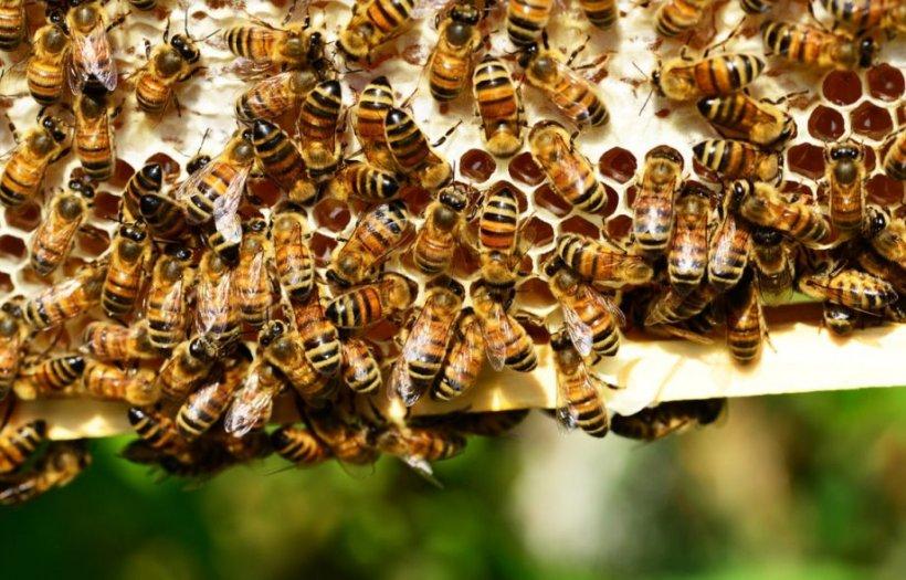 A pus o icoană cu Iisus în stup, iar când a deschis capacul bărbatul a rămas uluit: Ce s-a întâmplat cu albinele