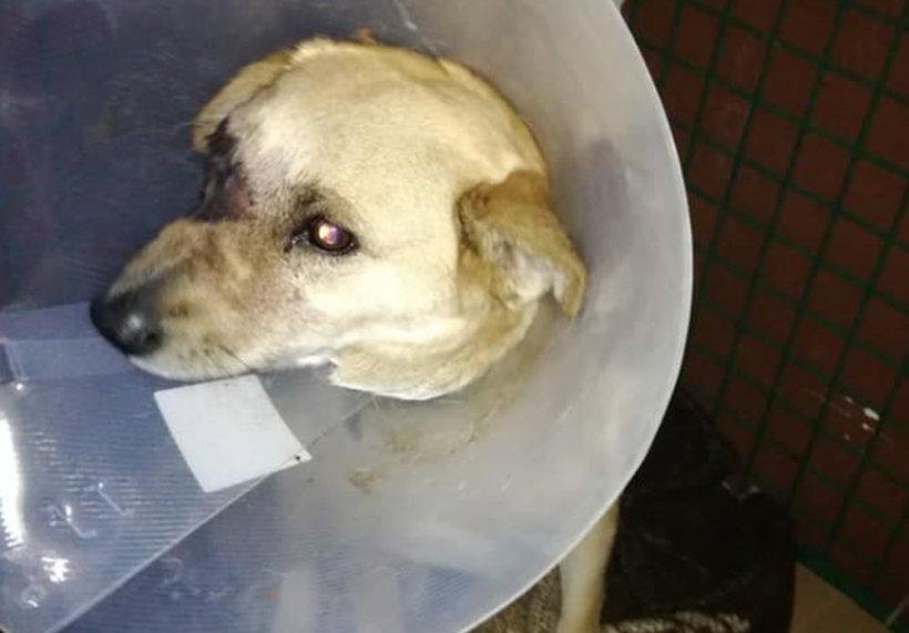 Constipatia la caini: Cauze, simptome si metode de tratament - Blog MobileVet