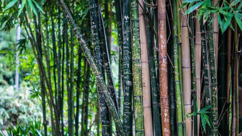 Numai de bine. Masajul cu bambus - Relaxare şi tonifiere