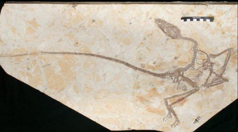 """O nouă specie de dinozaur """"dansator"""", confirmată de o echipă de oameni de știință"""