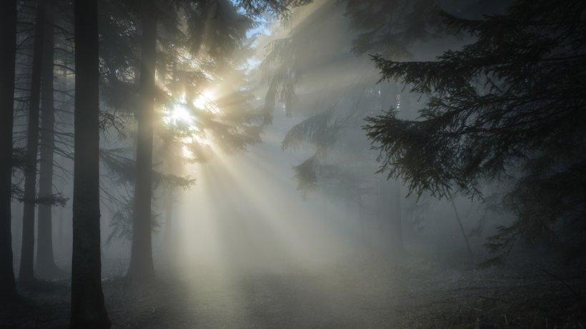 DIICOT anchetează în sfârşit jaful din pădurile României. Fostul ministru al Mediului, audiat de procurorii anti-mafia