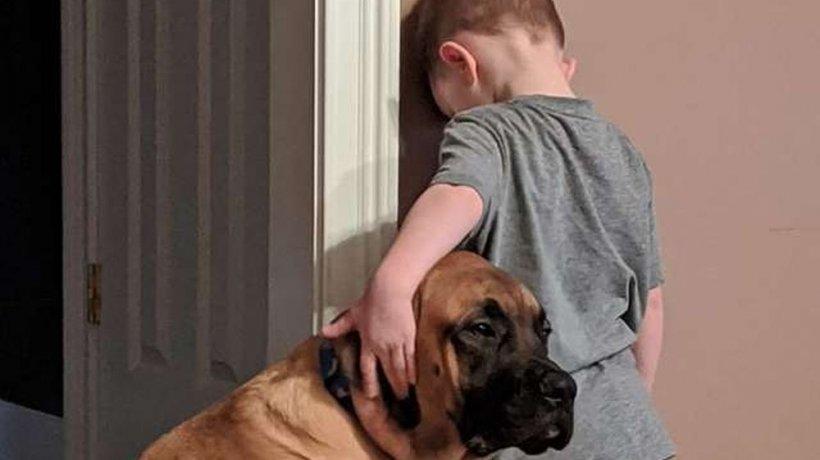 Băiețelul fusese pedepsit și trimis la colț de către părinți. Dar ce a făcut câinele familiei a uimit o lume întreagă. Știa că prietenul lui are nevoie de el