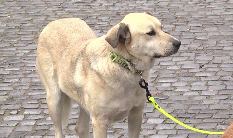 Ce s-a întâmplat cu câinii Cristinei Țopescu după moartea jurnalistei