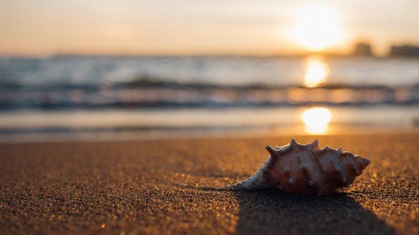 Avertismentul dur din partea oamenilor de știință: Jumătate din plajele lumii ar putea dispărea