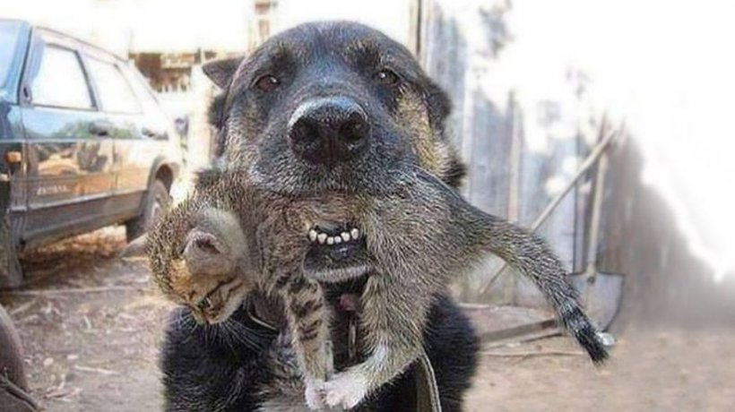 Câinele a reintrat în casa cuprinsă de flăcări sub privirile disperate ale stăpânului ca să-și salveze prietenul de joacă. S-a transformat într-un erou
