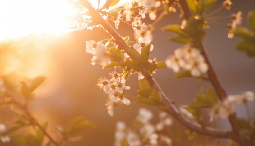 Prognoza meteo pentru luna aprilie. Cum va fi vremea de Paște