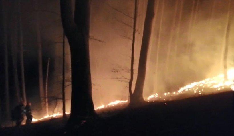 Incendiu uriaș pe 20 de hectare, în pădurea din Iedera, Dâmbovița