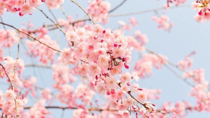 Vreme de primăvară în toată țara! Temperaturile cresc neașteptat de mult