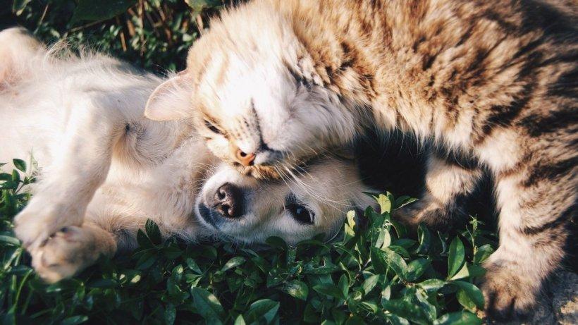 Medici: Nu interacționați cu animalele de companie dacă aveți COVID-19. Pisicile,cele mai vulnerabile