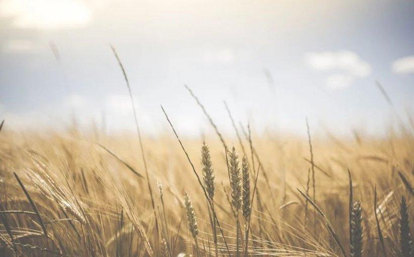 Guvernul vrea să oprească exportul de cereale