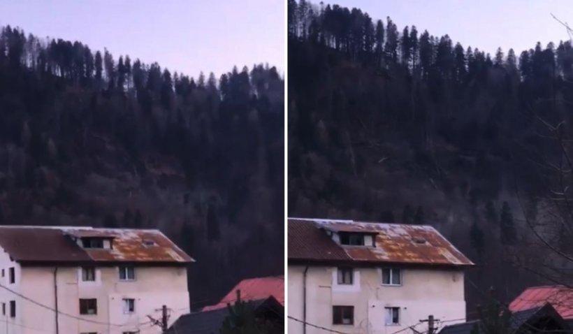 Noi imagini cu versantul prăbușit cu tot cu pădure, în Azuga. Terenul aparține Casei Regale