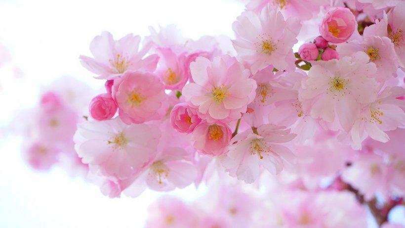 Florii 2020. Urări, mesaje, felicitări de Florii pentru oamenii dragi din viața noastră