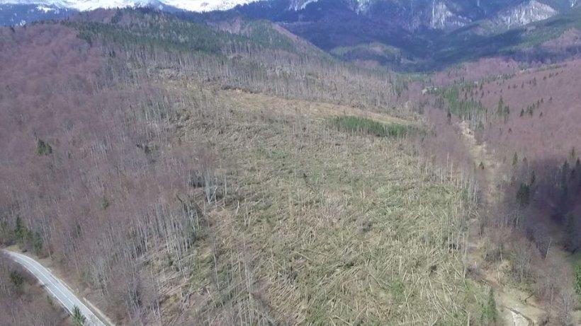 Copacii din pădurea doborâtă de vântul puternic vor fi folosiţi în industrie