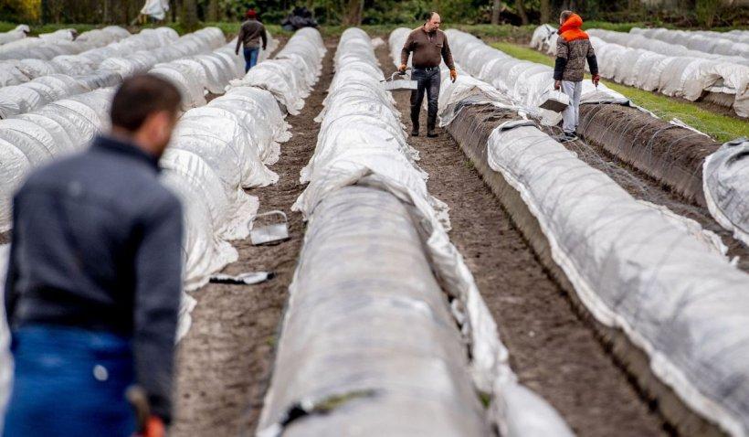 Ce fac sezonierii români dacă se îmbolnăvesc în Germania? Adevărul nespus de angajatori